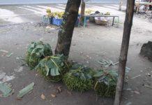 গোপালপুর বাজারে রাস্তার পাশে সরকারী জায়গায় অবৈদভাবে পানের ব্যবসা